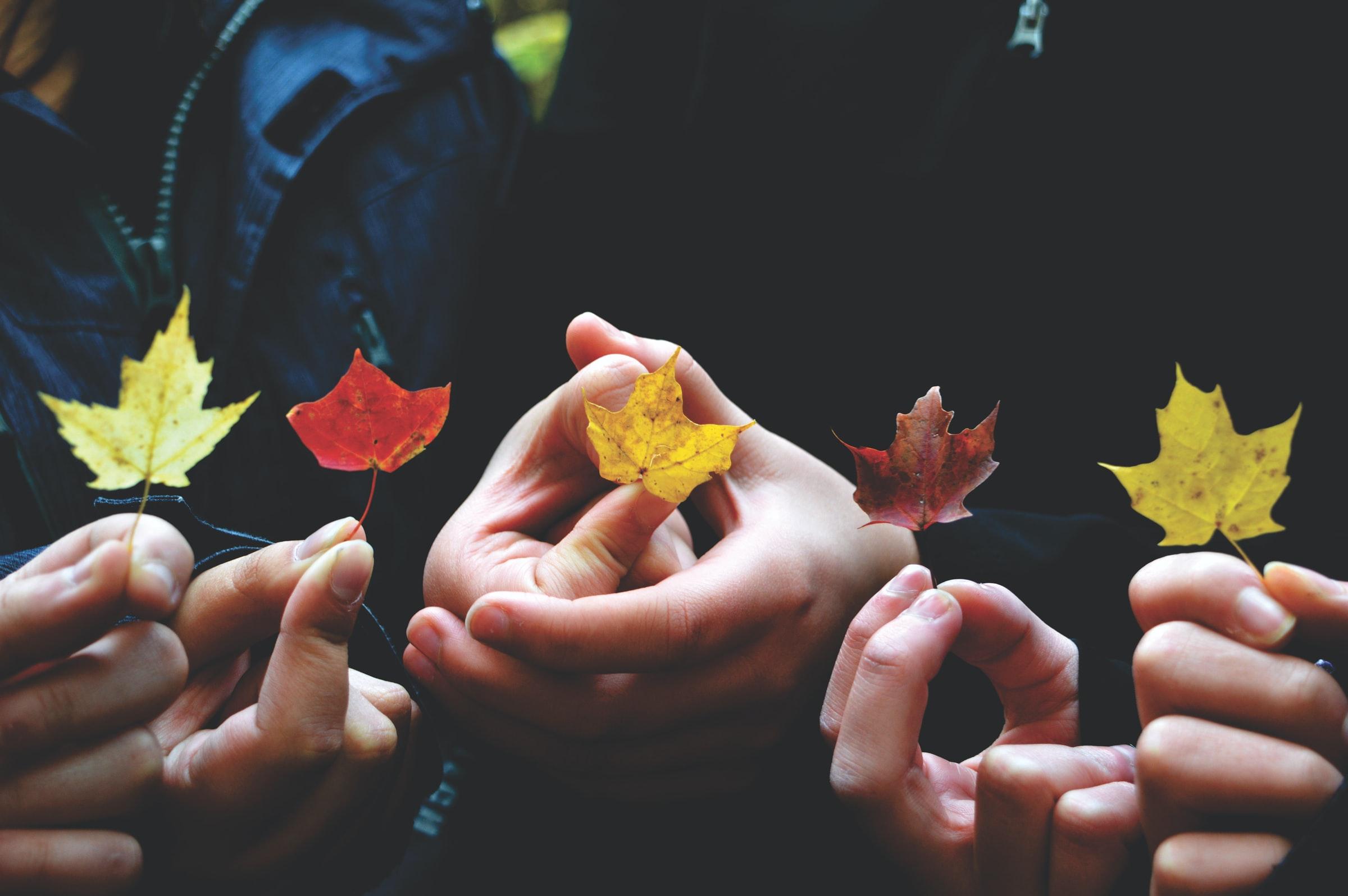 Vier Hände halten buntgefärbte Blätter